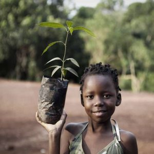 Mutuba tree planten